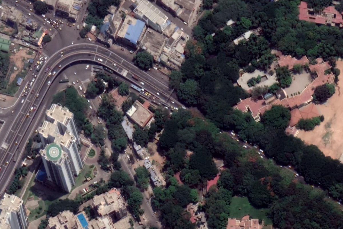 Satellite view of tree canopies in concretised Bengaluru. Tree canopies act like highways for arboreal animals such as the slender loris to move between areas. Vanishing green cover poses threat to the animal.