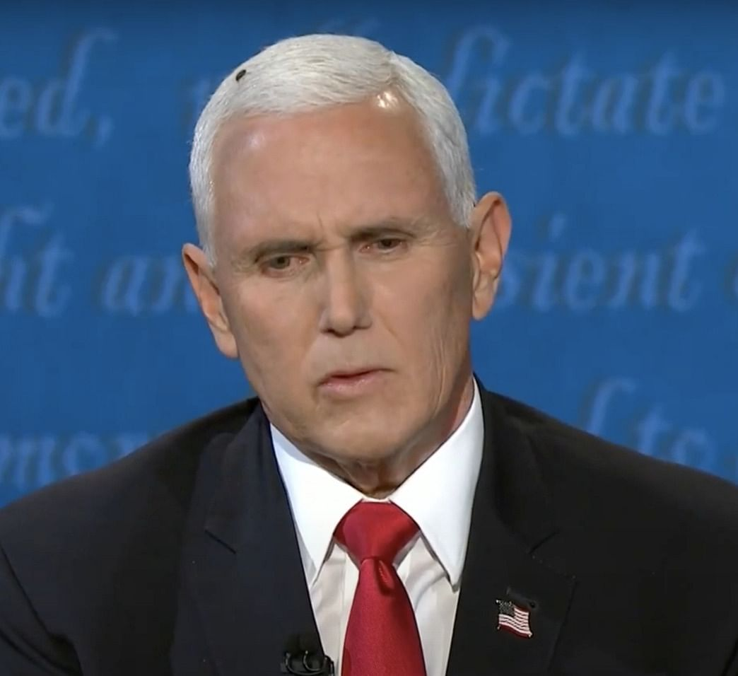 Close up of a fly that landed on Vice-President Mike Pence's head during the vice-presidential debate in Salt Lake City, Utah, on October 7, 2020.