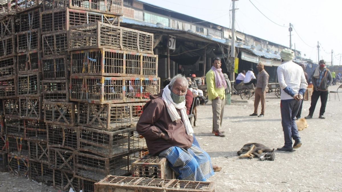 Bird flu cases reported from ten States so far: Centre