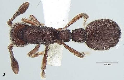New ant species discovered from Kerala named after evolutionary biologist Amitabh Joshi