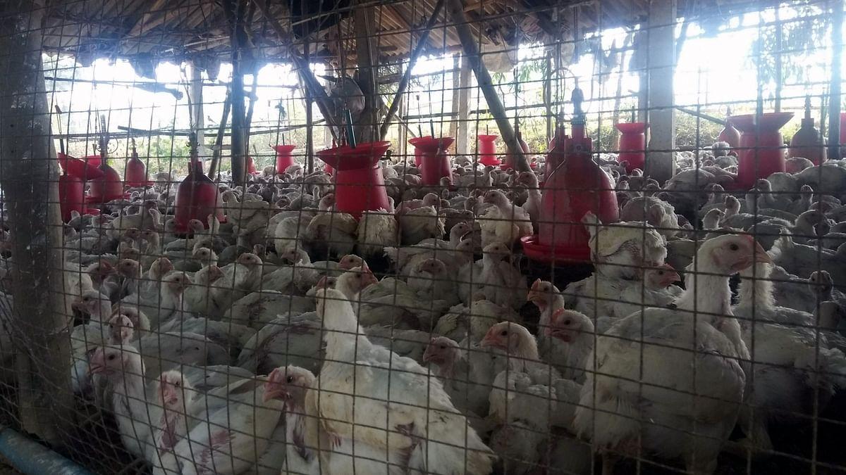 Bird flu confirmed in Delhi, samples test positive