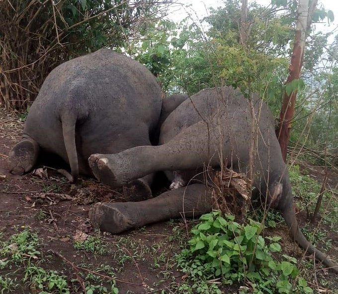 Lightning kills herd of 18 wild elephants in Assam