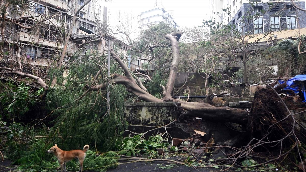 Cyclone Tauktae brought record May rains, left trail of destruction in Maharashtra