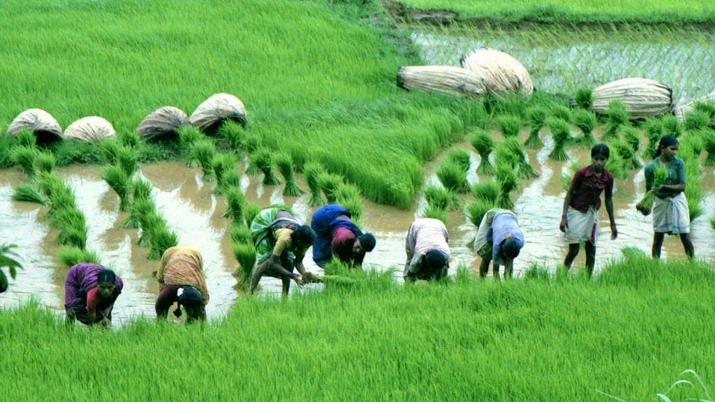 CCEA approves Nutrient Based Subsidy rates for Phosphatic & Potassic Fertilisers for 2021-22