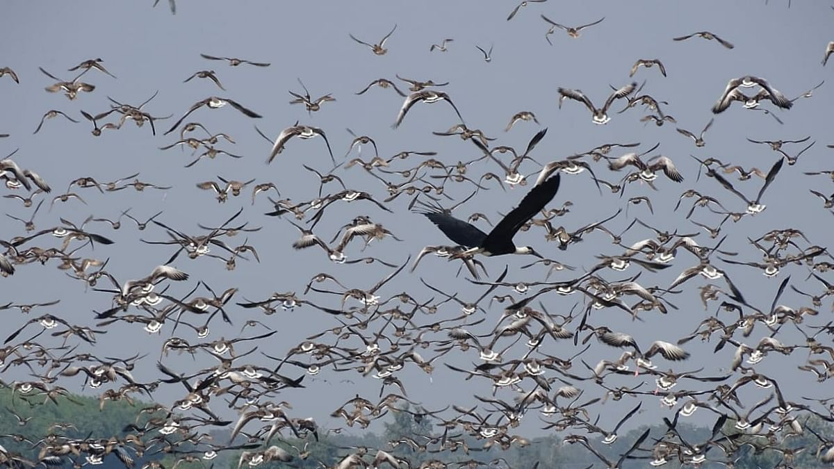 Two sites each in Gujarat, Haryana added to Ramsar List as Wetlands of International Importance