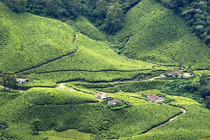 A scene of the hills in Munnar.