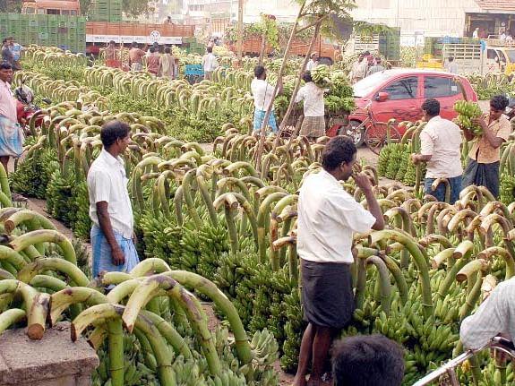 File photo of bananas at the Koyambedu Market in Chennai.