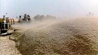 Wheat procurement goes up by 25,000 tonnes to 341.56 LMT