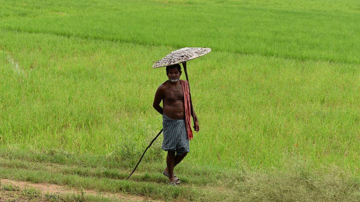 मध्यप्रदेश: मूंग की फसल को सुखाने के लिए किसान कर रहे हैं जहरीला छिड़काव