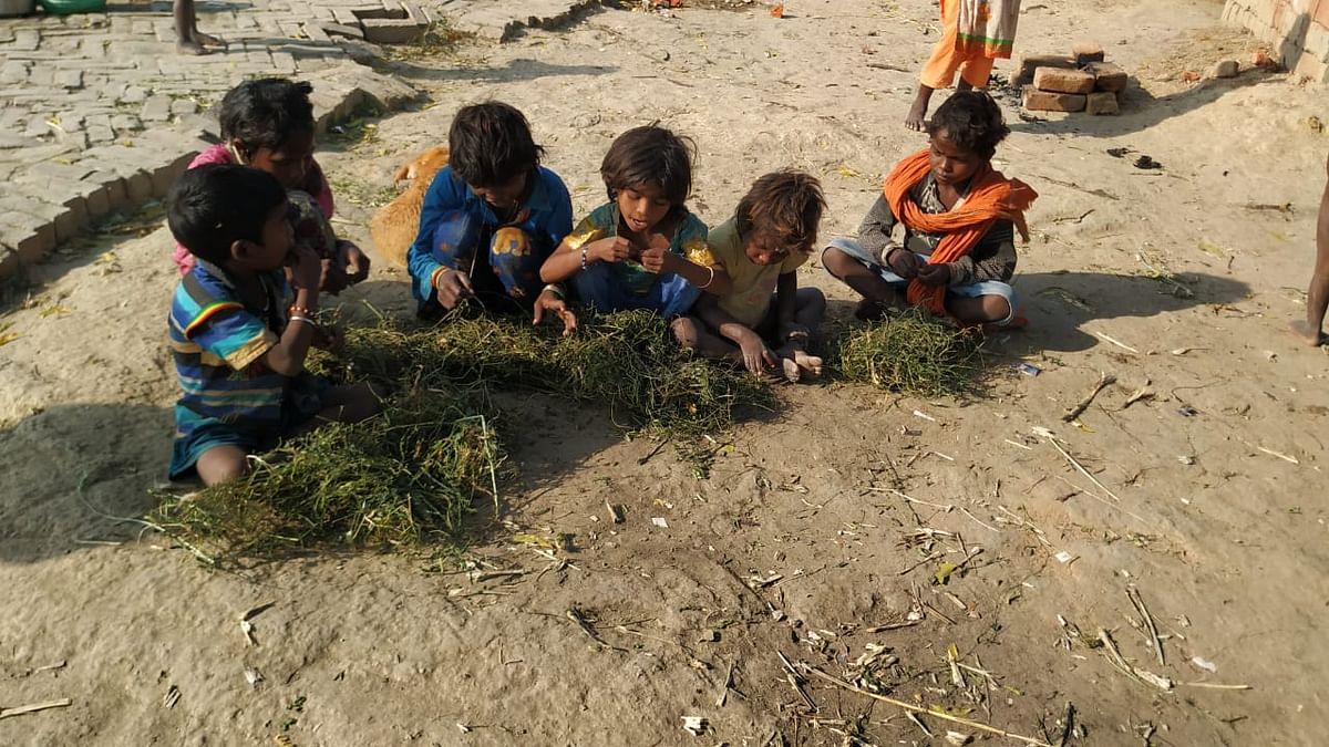 अंकरी घास खाते बच्चे