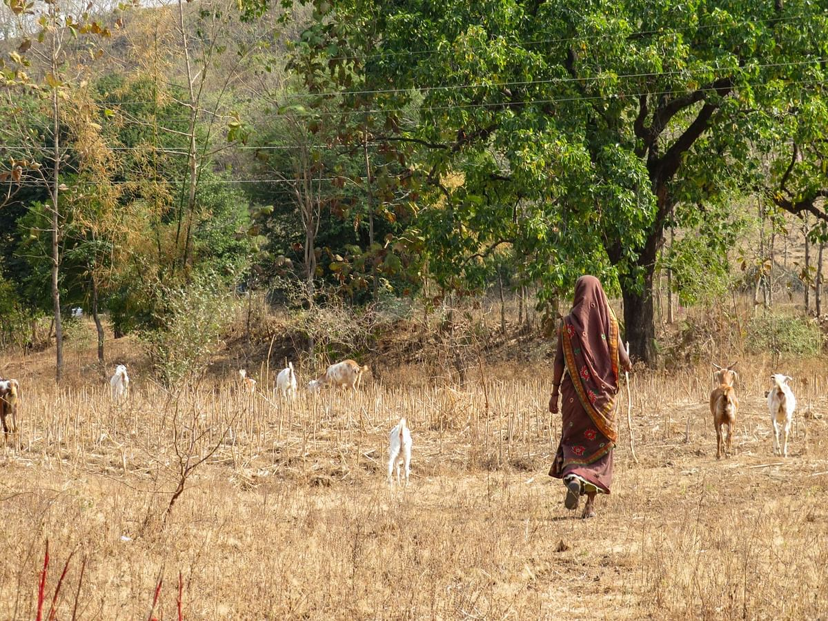 When Shevanta Tadvi is out grazing her 12 goats near the forest in Maharajapada hamlet, she is free from taunts of being 'barren'.