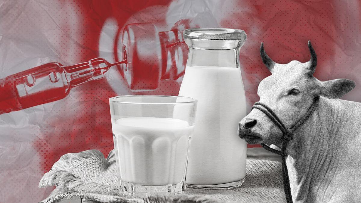 विष बनाम अमृत: दूध में एंटीबायोटिक