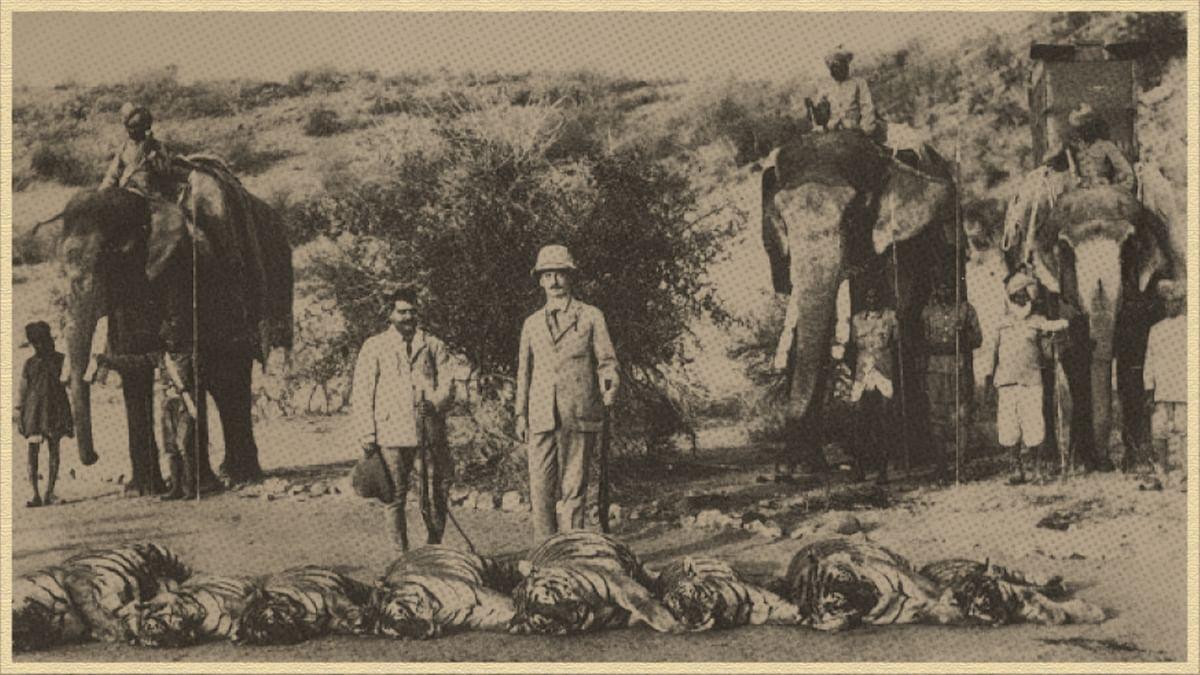 बाघ, वन और उपनिवेशवाद
