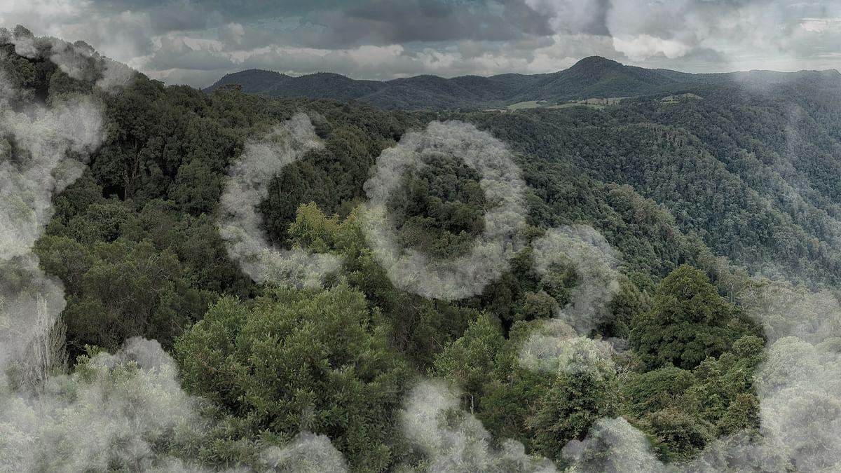 जंगलों की मिट्टी से कार्बन डाइऑक्साइड का उत्सर्जन