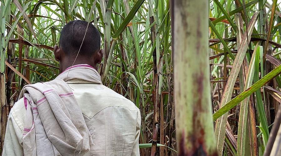 पीड़िता के पिता गन्ने के खेत में जहां नित्या का शव मिला था