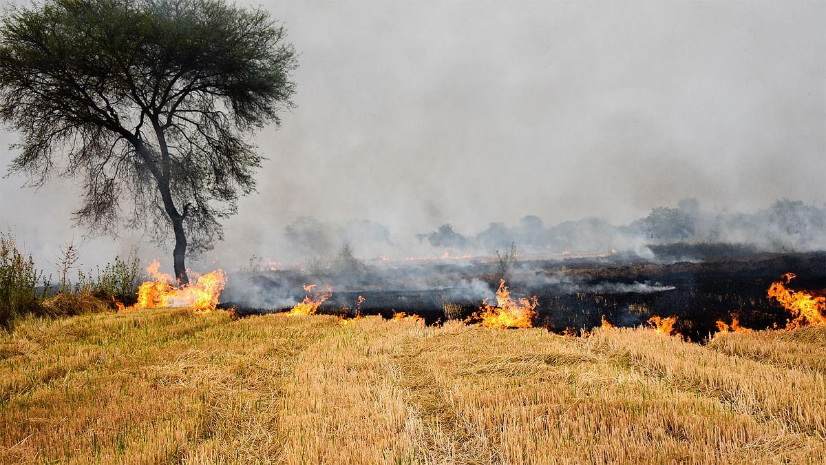 किसानों को पराली न जलाने की एवज में रुपए देना समाधान नहीं