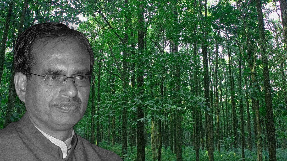 मध्यप्रदेश का 40 फीसदी जंगल निजी कंपनियों को देने का फैसला