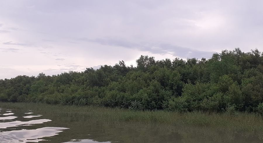 Sundarbans' mangroves which act as a shield to cyclones.