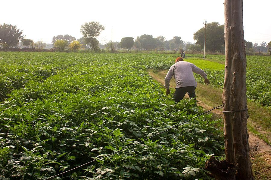 Asha's village in Hathras district, western Uttar Pradesh.