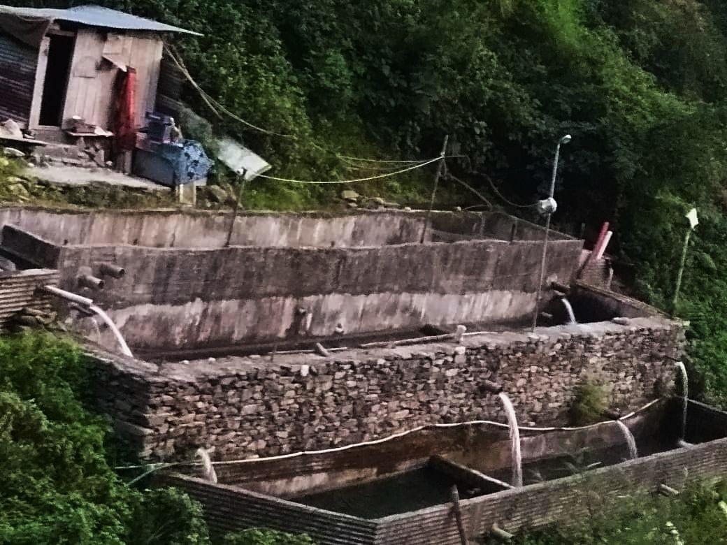 In stark contrast, a trout farm in Jogindernagar. Photo: Thakur Ram Lal