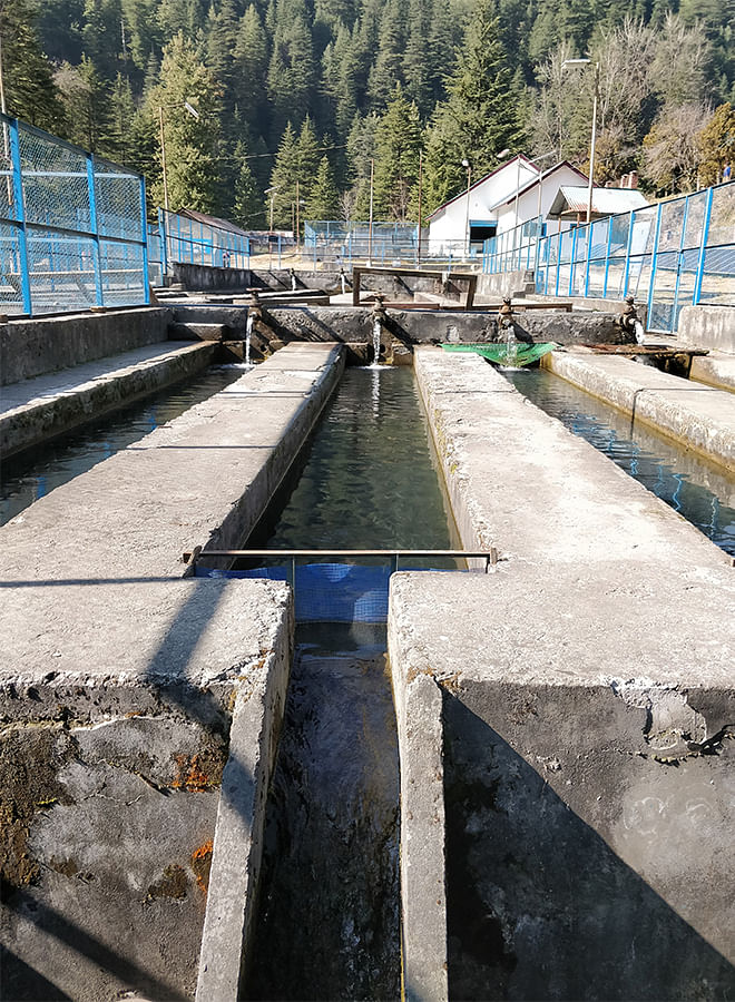 The cemented raceways in a government trout farm. Photos: Sidharth Singh