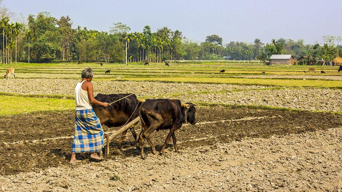 बजट भाषण: कृषि क्षेत्र प्राथमिकताओं में सबसे ऊपर है लेकिन आंकड़ों में यह दिखाई नहीं देता