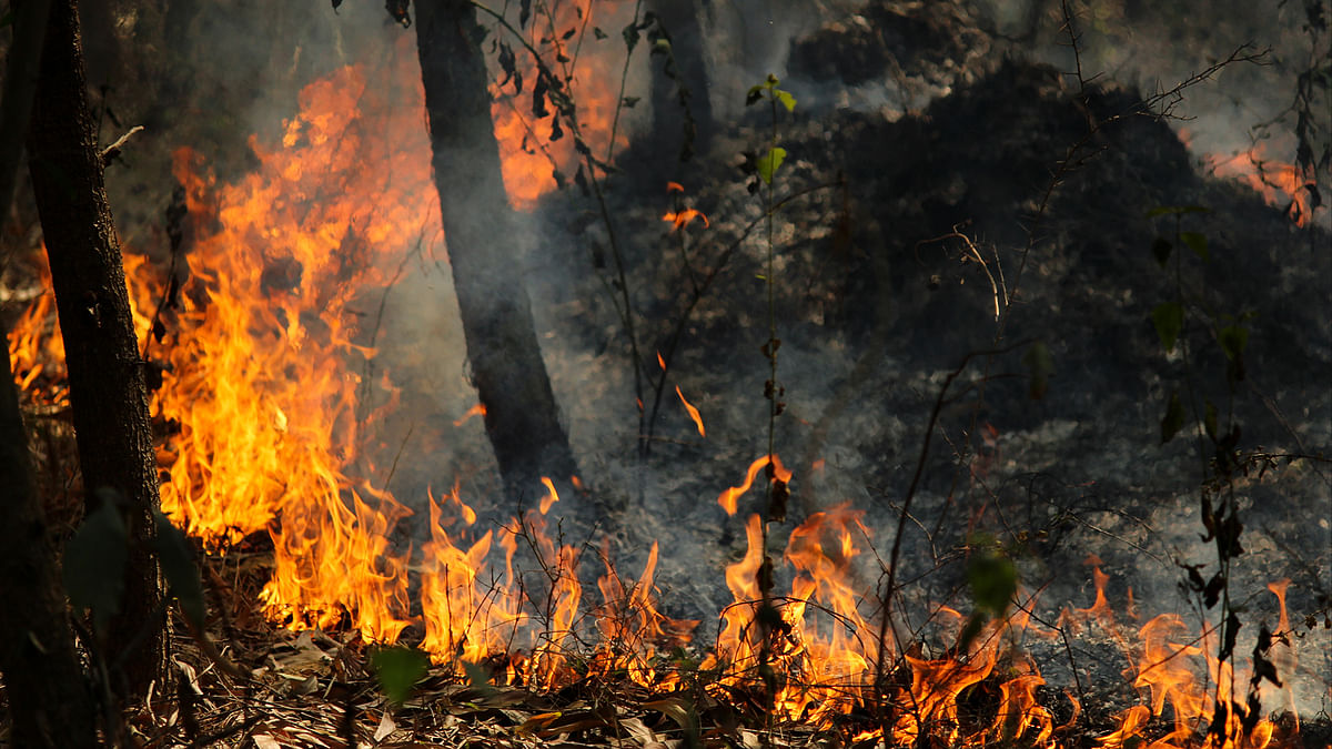 दुनिया भर के जंगलों में क्यों बढ़ रही हैं आग की घटनायें?