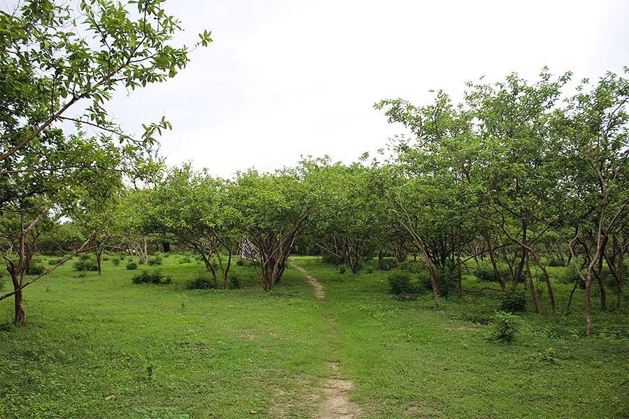अयोध्या के बाग बिजैसी गांव की जमीन