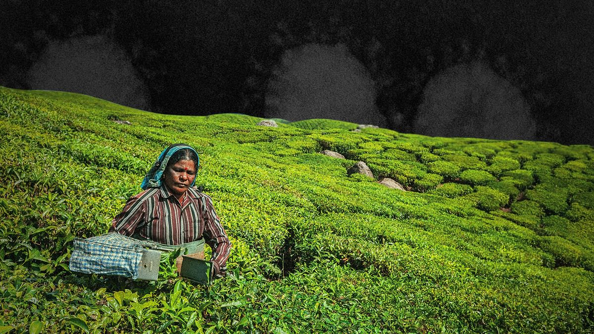 लोग गरीबी और भय के बीच बंगाल के डूआर्स चाय बागानों में कुछ ऐसे लड़ रहे हैं कोविड-19 से लड़ाई
