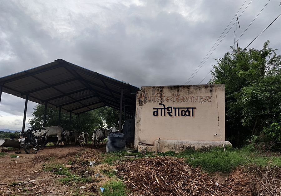 A cowshed in Akole.
