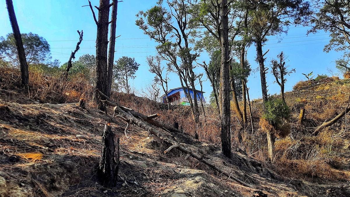 उत्तराखंड: जंगल बचाने वाले ग्रामीणों का जंगल पर ही नहीं है कोई हक