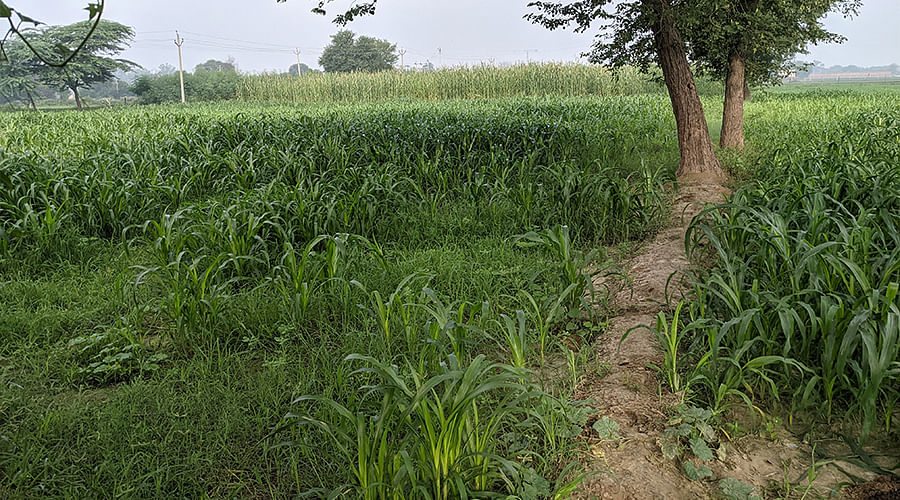 The field where Asha was gangraped.