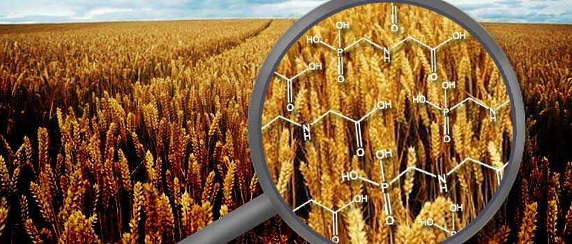 Exploring GM Foods (Part II – The Curious Case Against Glyphosate)