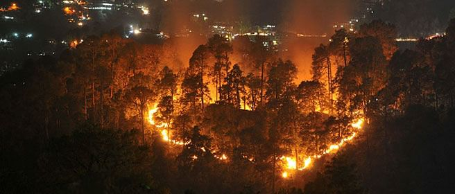 Number of forest fires increase by 30% in 2016