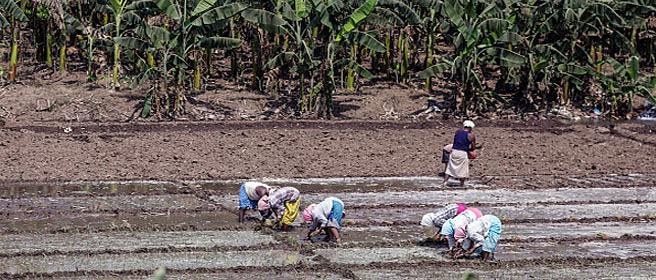 Less than 5% of farmers control 32% of India's farmland
