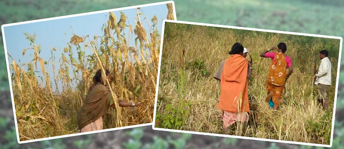The journey of Baiga tribe from malnourishment to food security