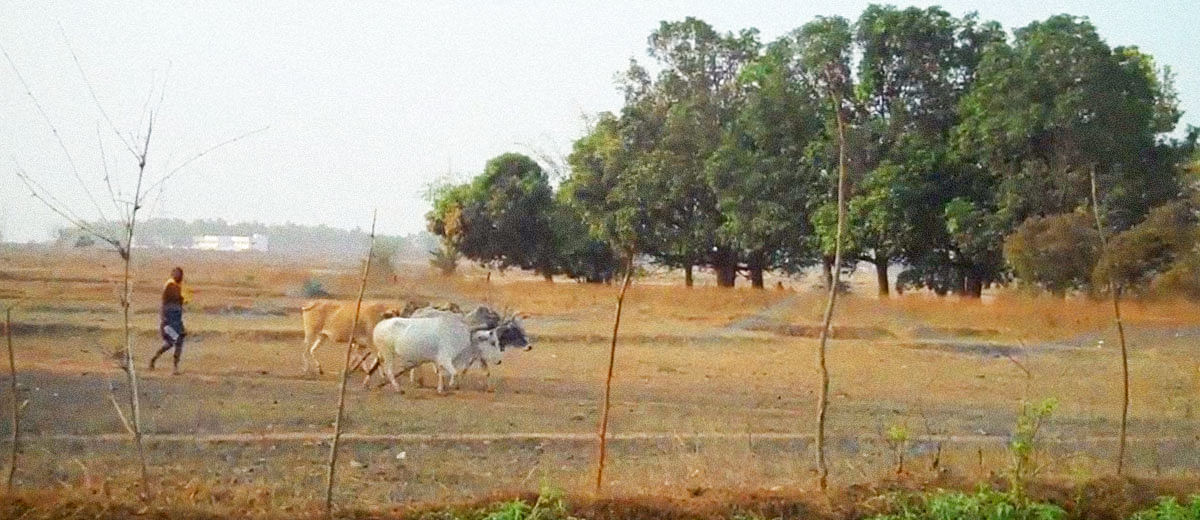 While mining giants rejoice, Adivasis are left with no water