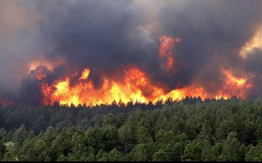 Forest Fire: IAF finds nine bodies, 30 rescued
