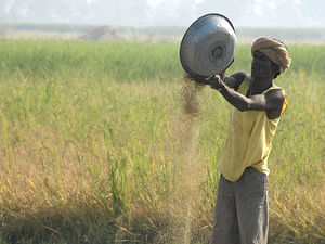 Kharif rice output to be less