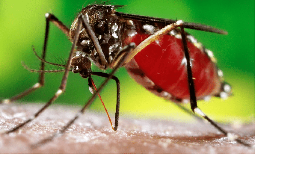 40 dead, over 12,000 affected by dengue, TN tells central team