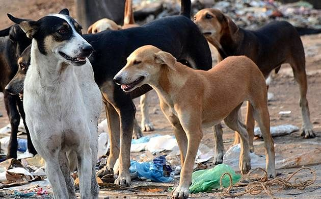Stray dogs enter mortuary, eat face of body; UP Govt orders probe