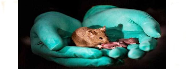 Ray of hope for same-sex couples: Asexual reproduction possible among mammals!