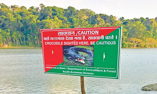 Fresh sighting of Crocodiles in South Andaman Village; area under watch