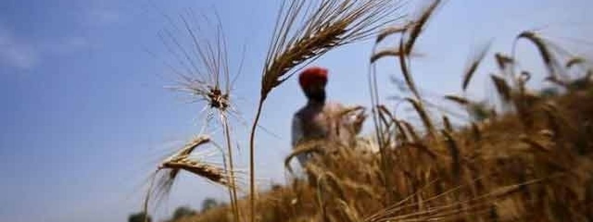 Drought-like situation forces 830 distressed farmers to take their lives