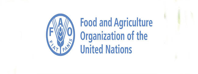 FAO warns of impact of price and currency trends on smallholder incomes