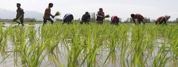 Income Support bonanza for farmers; separate Department of Fisheries in Budget 2019-20 proposals