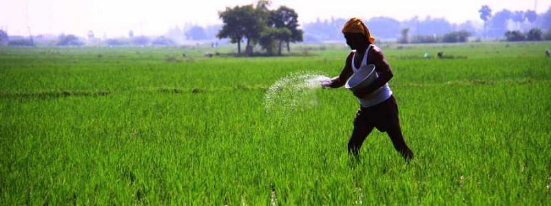 Cash dole of Rs 6,000 for small farmers