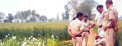Farmer held for allegedly cultivating poppy crop in Punjab