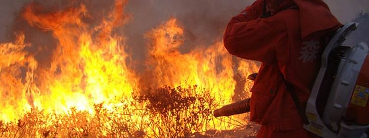 China forest fire: 24 dead as firefighters battle