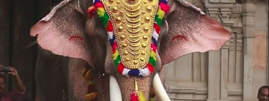 Ahead of Pooram, tusker issue heats up